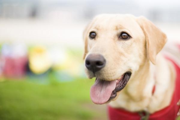 耳が垂れている犬種