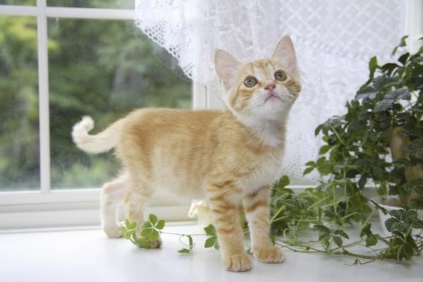 ネコちゃんの混合ワクチンについて
